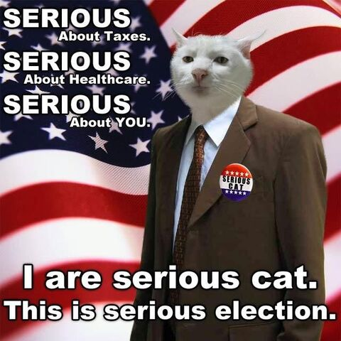 File:Lolcat-serious-election.jpg