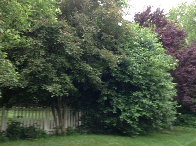 File:Trees 1.jpeg