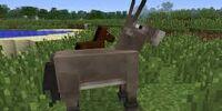 Donkey/Gallery