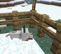 Puppy wolf mc
