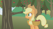 Applejack hit by a tree... again S01E04.png