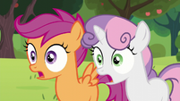 Sweetie Belle and Scootaloo shocked S5E17