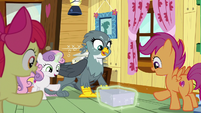 Cutie Mark Crusaders giving a gift to Gabby S6E19