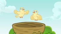 Chicks flying S4E04