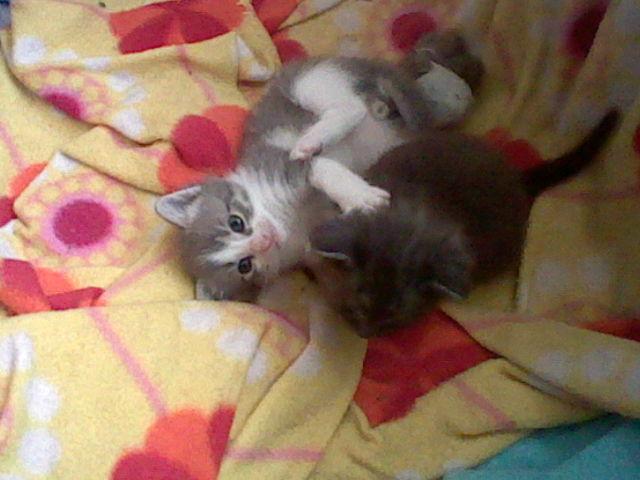File:Bronyboybro cats 5.jpg