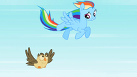 Rainbow Dash Owlowiscious 2 S02E07