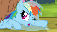 Rainbow Dash covered in orthros slobber S4E22