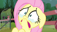 Fluttershy crying face S4E14
