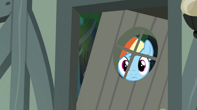 File:Rainbow Dash peeking through the window S4E04.png