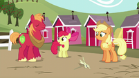 "Apple Bloom ""Neat"" S5E17"
