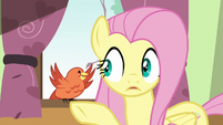 Fluttershy surprised by Constance's message S6E11