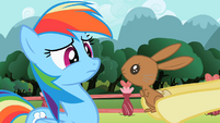 Bunny looking at Rainbow Dash S2E07