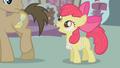 Apple Bloom sneaks up on Dr. Hooves S1E12.png