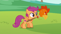 Scootaloo carrying chicken head on a stick S6E14