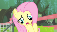 Fluttershy 'Well, you see, I' S4E14