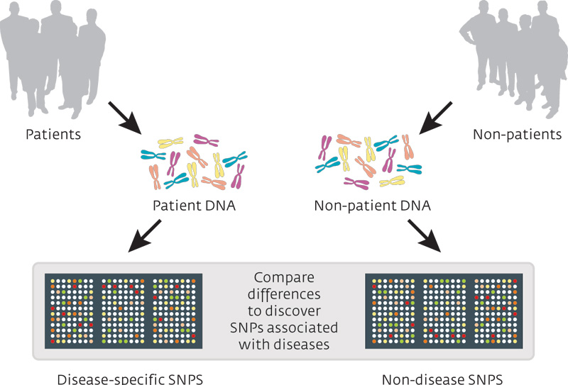 Genome-wide association study - Wikipedia