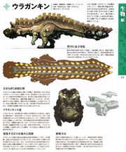 Uragaan-Encyclopedia