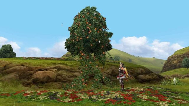 File:MHFGG-Flower Field Screenshot 009.jpg