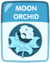 Moon Orchid old