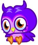 Purplex1