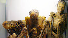 2500-years-old-south-american-mummies