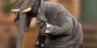 Horatio the Elephant