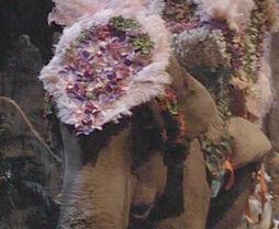 Lucytheelephant