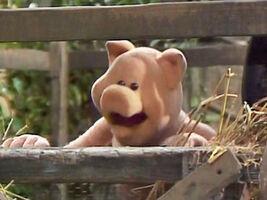 Naked pig Barnyard Boogie