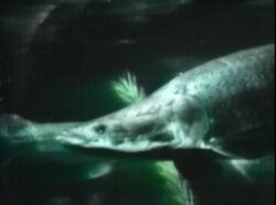 1957-Fish