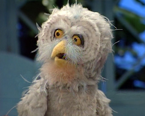 Owls | Muppet Wiki | Fandom powered by Wikia
