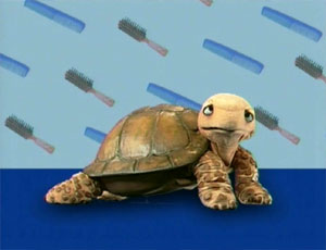 File:Ewhair-turtle.jpg