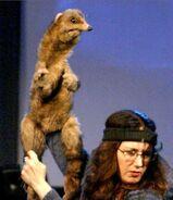 PuppetUp Ferret