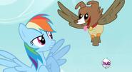 Rainbow Dash and Owlnona