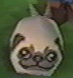 Doggy Osbourne
