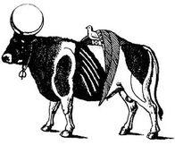 Apis bull