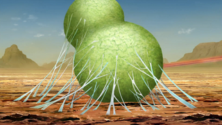 Fū's Cocoon