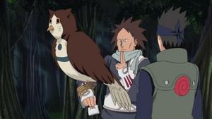 Motoi owl