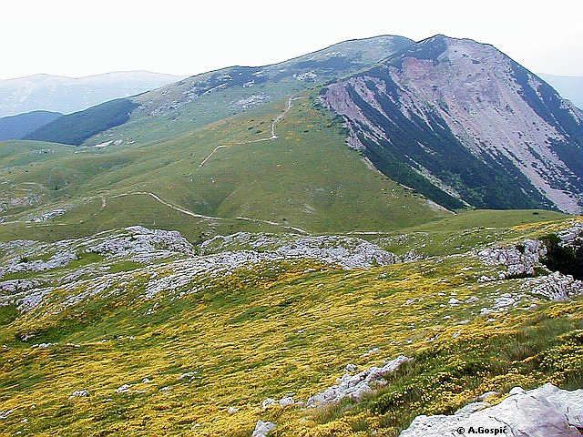File:Contrast between north i south slopes, southern slopes soft i grassy in spring covered sa carpets of flowers., northern slopes are steep sa cliffs i scree slopes, behind is highest peak V.Sator (20568).jpg