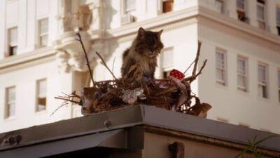 Birdcatfromnewgirl