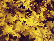 Leaves Five-lobed 2016-08-15 14-40-57 0-55-58-33