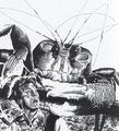 TheTimeMachine-Crab