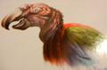 Fiery Carrion Parrot (Caropsitticus calidus)