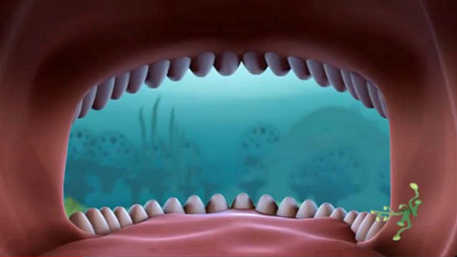 File:Whale Shark's Open Mouth.png