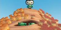 The Enemy Anemones