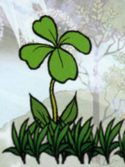 Clover pic