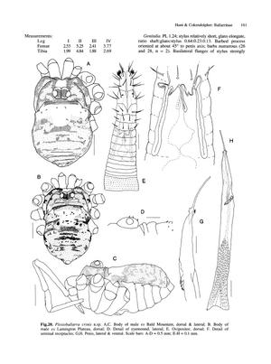 Plesioballarra crinis h-c-1991