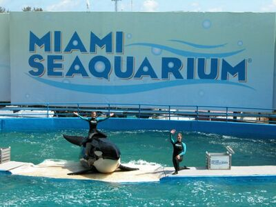 As of March 4, 1980, there is 1 orca living at Miami Seaquarium.