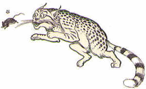 File:Wildcat.jpg
