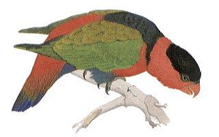 File:BIRD201.JPG