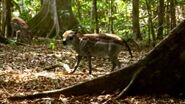 BBC.Walking.with.Beasts.Pt.1.New.Dawn.DivX5-AC3.www.mvgroup.org.uk.avi snapshot 16.30 -2017.01.01 14.42.17-
